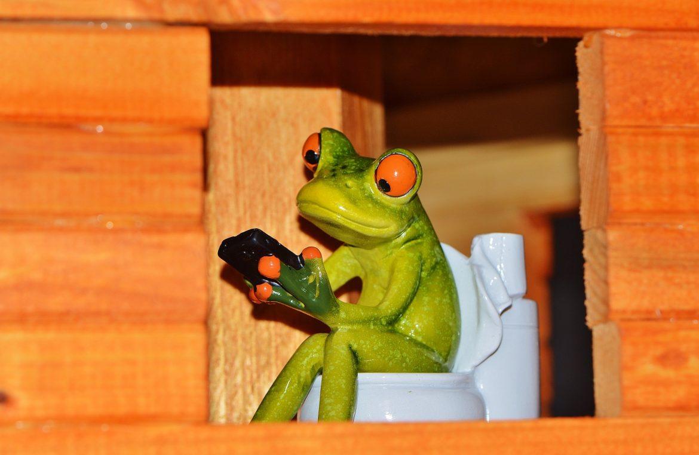grenouille sur toilette