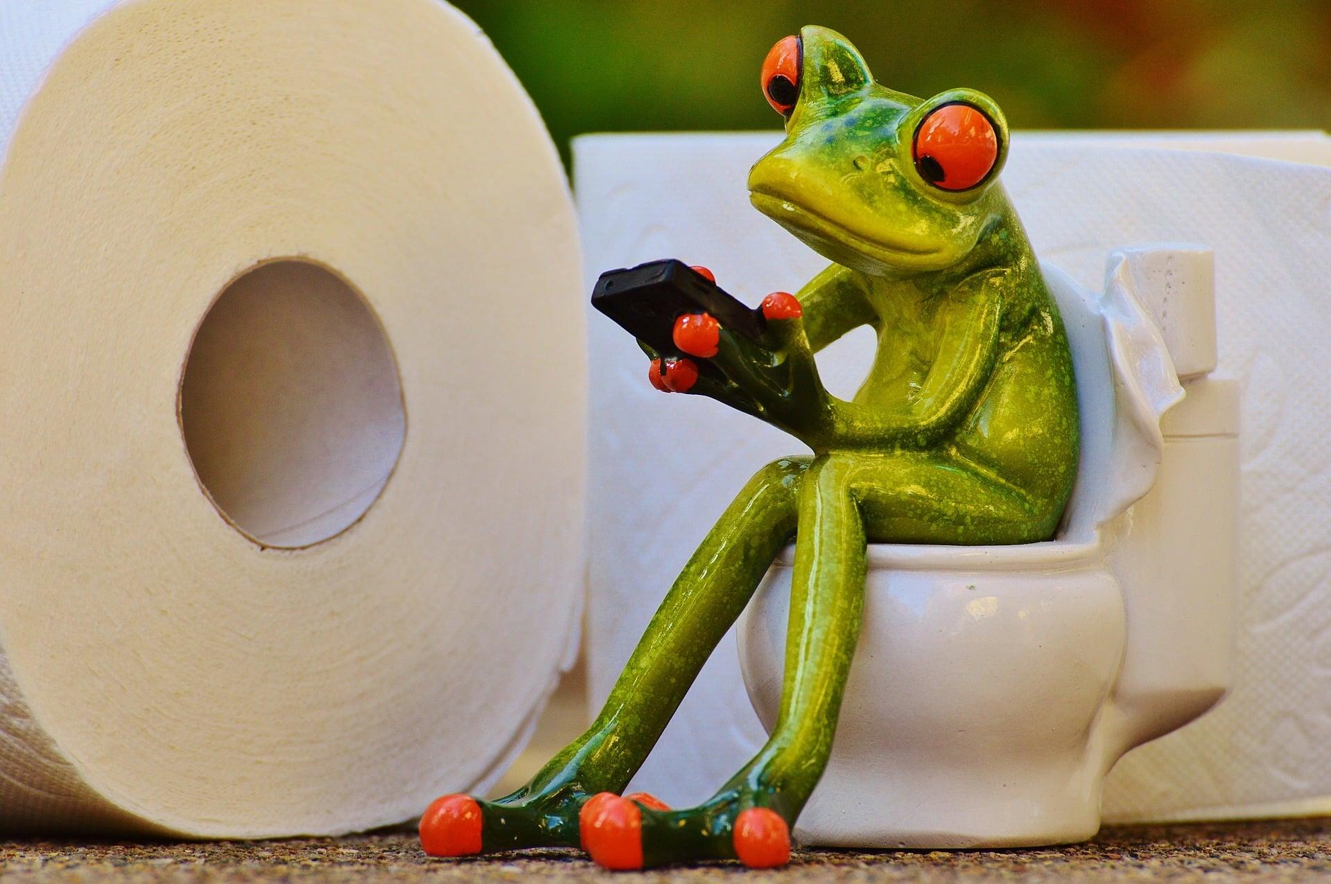 grenouille sur une toilette