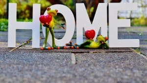 home-love-frogs