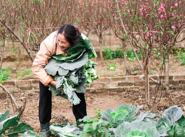 Légumes, cueillette, ferme