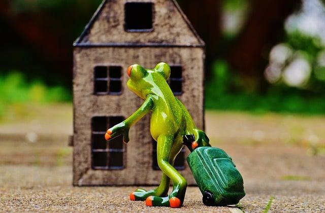 Voyage, grenouille, bagage, valise