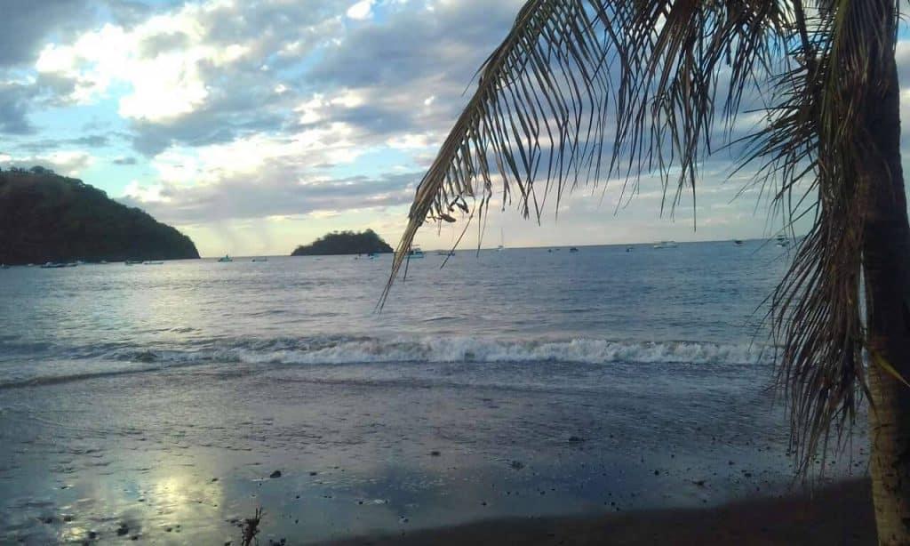 plage, palmier, océan, horizon