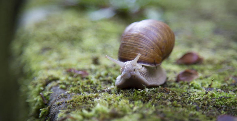 escargot, ralentir